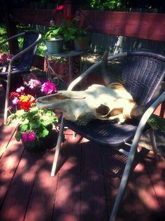 Cow skull garden and home decor