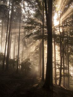 "magic-spelldust: ""Warm Light by wosicz "" Alone Photography, Light Photography, Beautiful Sites, Beautiful Places, Forest Mural, Forest Light, Dark Tree, Forest Pictures, Landscape Photos"