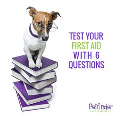 Do you know how to help your pet in an emergency? Click ahead to take our quiz, then let us know how you did!