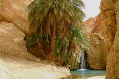 Oasis de Chebika - Tunisie - djebel©bodha08IMG_8343.JPG
