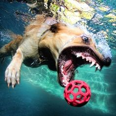Fantastic underwater dog photography by Seth Casteel. go to his website for more amazing shots!