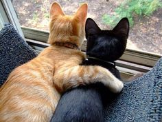 True friendship. This is so sweet. I love cats
