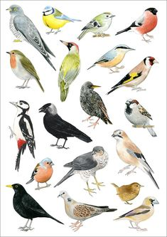 Your place to buy and sell all things handmade Bird Pictures, Pictures To Paint, Bird Drawings, Animal Drawings, Watercolor Bird, Watercolor Paintings, Bird Identification, Bird Poster, Bird Theme