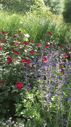 1000 Images About Gardens On Pinterest August 2014 Paradise And Floral