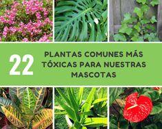 Las 74 mejores im genes de plantas toxicas para gatos - Plantas venenosas para gatos ...