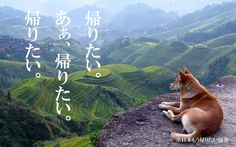 Dogs See Landscape Wallpaper Free Wallpaper Landscape Wallpapers, Hd Landscape, Landscape Pictures, Fantasy Landscape, Mountain Landscape, Tier Wallpaper, Dog Wallpaper, Animal Wallpaper, Wallpaper Desktop