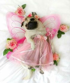 I would call her my pretty princess girlie #pug