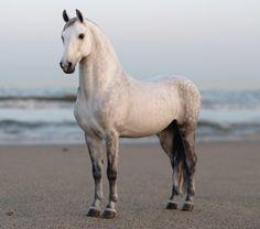 Pretty horse standing on the beach. Faran AP#1 - Josine - Picasa Web Albums
