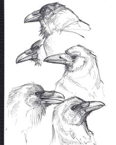Pen sketches done for practice. Ant Drawing, Crows Drawing, Gesture Drawing, Bird Drawings, Animal Drawings, Cool Drawings, Drawing Sketches, Pencil Drawings, Crow Art