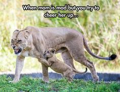 Just Lion Things
