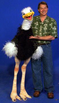 struisvogel pop
