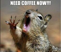 20 Funny Squirrel Pictures - The Funy. Funny Squirrel Pictures, Funny Animal Pictures, Funny Animals, Cute Animals, Wild Animals, Baby Animals, Coffee Talk, I Love Coffee, My Coffee