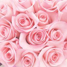 Roses via @Rosa Hans Hans Loves DC