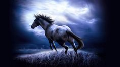 2015 Neoprene Laptop Sleeve Soft Case Cover For 7 10 12 13 15 inch Tablet Notebook Netbook Mini PC Capa Para Notebook Tier Wallpaper, Best Wallpaper Hd, Horse Wallpaper, Animal Wallpaper, Wallpaper Pictures, Computer Wallpaper, Mobile Wallpaper, Seagrass Wallpaper, Wallpaper Awesome