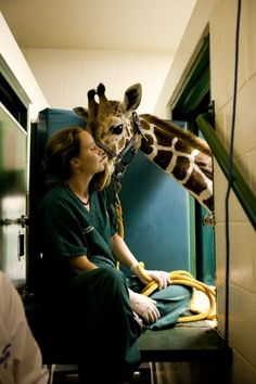The Zoological Medicine Service offers the highest quality veterinary diagnostic and treatment care for all exotic and non-domestic animals, including Florida indigenous wildlife and non-native exotic pets. Vet Pictures, Vet Tech Quotes, Small Animal Hospital, Vet Jobs, Wildlife Biologist, Cute Beagles, Vet Med, Work With Animals, Veterinary Medicine