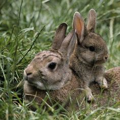 wild bunnies