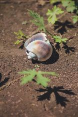 Snail on a wet ground stock photo