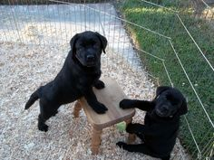 I think I interrupted a puppy business meeting.