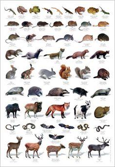Wildlife Identification Poster                                                                                                                                                     More