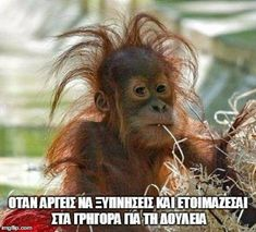 """My hairstyle today is called: """"I tried"""" funny jokes funny quotes humor funny pics fun quotes funny images fun pics jokes and fun Funny Animal Memes, Animal Quotes, Funny Animal Pictures, Funny Photos, Funny Animals, Funny Memes, Funniest Memes, Funniest Quotes Ever, Animal Humor"""