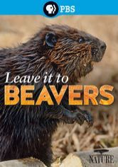 Beavers are awesome. Nature: Leave It to Beavers
