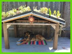 3 Practical Tips For Building Your Own Dog House Awesome succulent roof dog house my mom made for her pup Diy Indoor Dog Kennel Plans How To Build A Dog House Roof How. Dog Friendly Backyard, Dog Backyard, Backyard Ideas, Fence Ideas, Build A Dog House, Dog House Plans, House Building, Pallet Dog House, Large Dog House