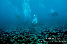 Divers explore the underwater tire reef   which comprises approximately 34 acres