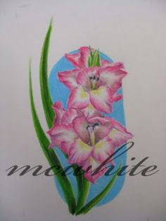 Gladiolus tattoo with out the blue back ground