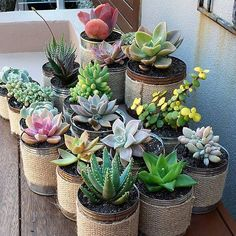 Pinned by apothecaryteaandgallery  #succulents #houseplants #gardening #indoorjungle I can! #succulove by @thesucculentguy