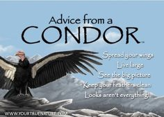 Change advice from a Condor: See the Big Picture. Your True Nature