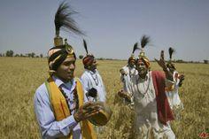 Toutes les infos : http://www.amatu-artea.com/agenda/festival-asiatique/baisakhi-dans-le-penjab-indien.html #Baisakhi  le festival des moissons au #Penjab