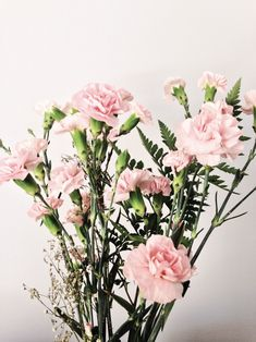 """throughthechapters: """"Dianthus caryophyllus Also known as carnations. They express love, fascination and distinction. Pink carnations symbolise a mother's undying love. """""""