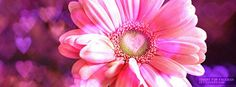 Love Daisy - Facebook Covers | Facebook Profile Covers