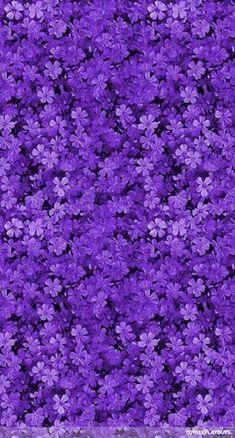 Purple Photo: Purple Aesthetic
