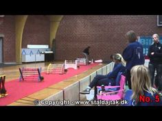Danish Championships 2012 in Rabbit Hopping - Elite straight - Top 10 - YouTube