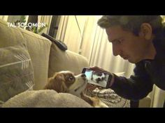 Just a Snoring Dog Being Awakened by a Video of Him Snoring     «TwistedSifter