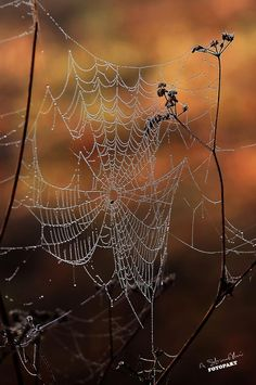 Kiedy słońce się zbliża do ziemi, a chłody dają we znaki, wiatr przysiada na drzewach i śpiewa małym pająkom, które tkają jesienne kwiaty :)  fot: Arkadiusz Strzałkowski