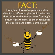 I think I was a honey bee 🐝 in my past life! I Love Bees, My Love, Bee Friendly, I Love Coffee, Coffee Coffee, Coffee Shop, Sweet Coffee, Happy Coffee, Coffee Lovers