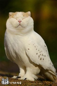 """""""Meowls"""" are a bizarre yet adorable combination of owls' bodies with cats' heads superimposed on top of them. Bizarre Animals, Animals And Pets, Baby Animals, Funny Animals, Cute Animals, Animal Mashups, Animal Memes, Photoshopped Animals, Owl Cat"""
