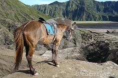 Horse in the volcanoes area