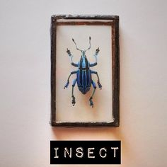 .@uneindiscretion | My little alphabet book. Day 9: [i]nsect #abcfee #insect #nature #bug #collec...
