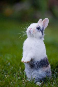 Super Cute Bunny Rabbit Real - Bing images