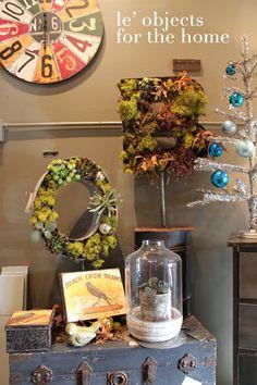 cool succulent display