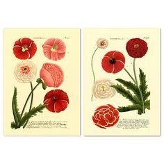 Weinmann Flowers II