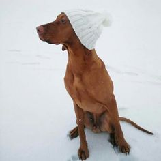 this will be my dog in the future... wearing her own hat