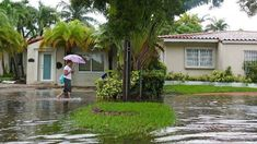 Years ago, before 2010, the tidal gauge at Virginia Key showed high tide floods maybe twice a year. Miami Street, Flood Damage, Sea Level Rise, Restoration Services, University Of Miami, Gold Coast, South Florida, Environment, Things To Come