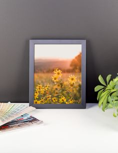 Yellow Aster Flowers at Sunset - Framed Photo Print