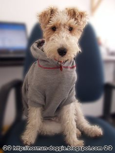 Norman Hoodie Sweater | wire fox terrier | Juanita | Flickr