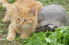 10 Photos That Show Cats and Tortoises Love Each Other