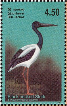 Black-necked Stork stamps - mainly images - gallery format